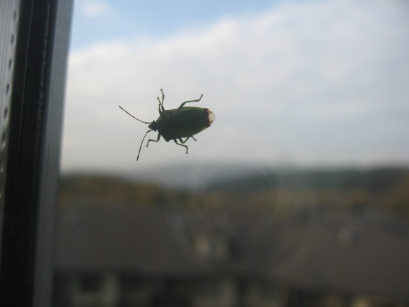 beetle on window