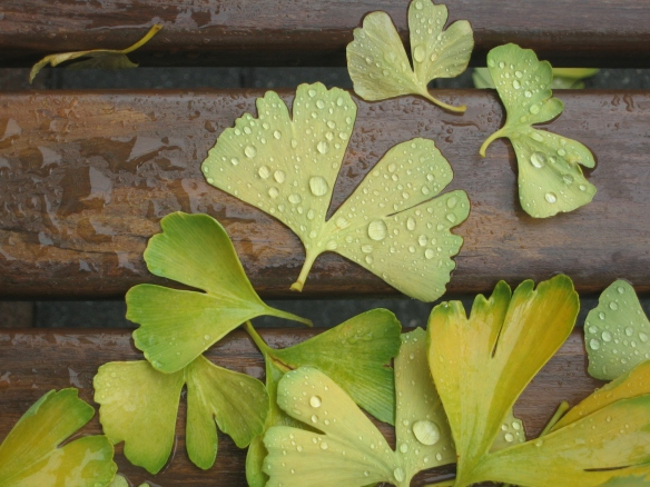 wet leaves on bench