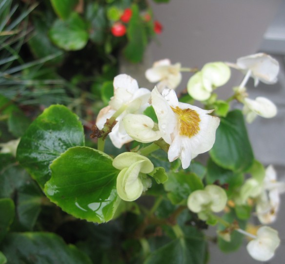 water on leaves and flowers